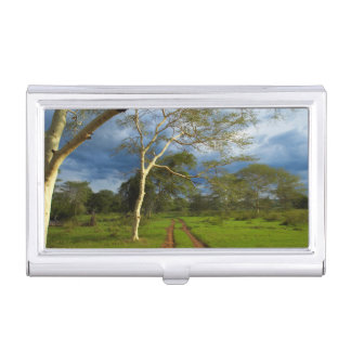 Fever Tree (Acacia Xanthophloea) By Dirt Track Business Card Holder