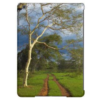 Fever Tree (Acacia Xanthophloea) By Dirt Track Case For iPad Air