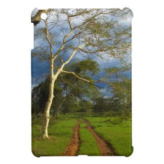 Fever Tree (Acacia Xanthophloea) By Dirt Track iPad Mini Cases