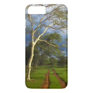 Fever Tree (Acacia Xanthophloea) By Dirt Track iPhone 7 Plus Case