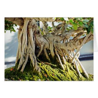 Ficus Banyan Bonsai Tree Roots Greeting Card