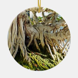 Ficus Banyan Bonsai Tree Roots Round Ceramic Decoration