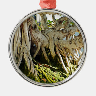 Ficus Banyan Bonsai Tree Roots Silver-Colored Round Decoration