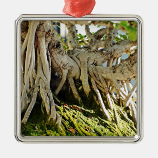Ficus Banyan Bonsai Tree Roots Silver-Colored Square Decoration