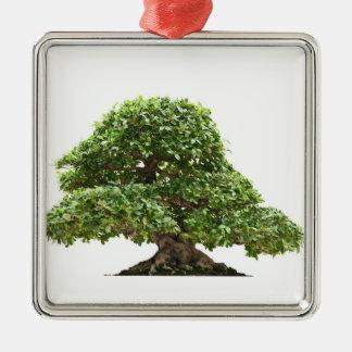 Ficus bonsai isolated Silver-Colored square decoration