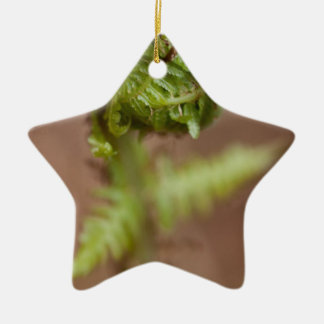 Fiddlehead Macro Ceramic Star Decoration