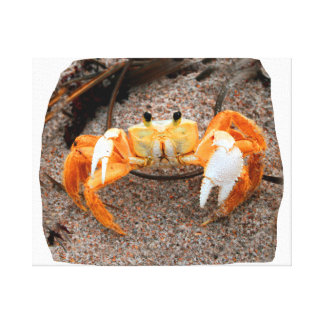 Fiddler Crab On Beach Colorized Orange Gallery Wrapped Canvas