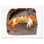 Fiddler Crab On Beach Colourized Orange Photographic Print