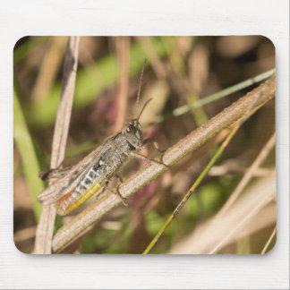 Field Grasshopper Mouse Mat