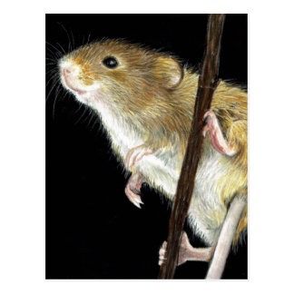 Field Mouse design Postcard