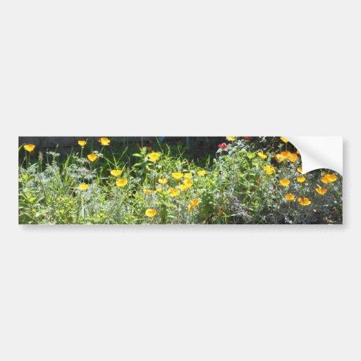 Field of CA Poppies Bumper Sticker