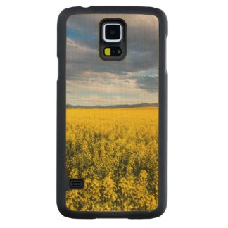 Field Of Canola In Late Evening Light Maple Galaxy S5 Slim Case