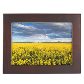 Field Of Canola In Late Evening Light Memory Box