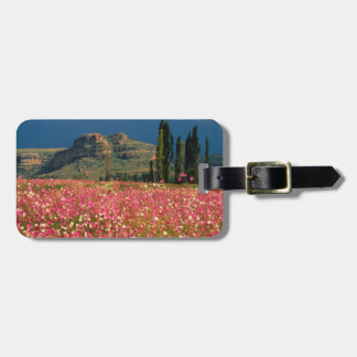 Field of Cosmos flowers, Fouriesburg District Bag Tag