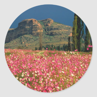 Field of Cosmos flowers, Fouriesburg District Classic Round Sticker