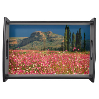 Field of Cosmos flowers, Fouriesburg District Serving Tray
