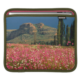 Field of Cosmos flowers, Fouriesburg District Sleeve For iPads
