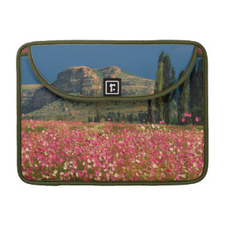 Field of Cosmos flowers, Fouriesburg District Sleeve For MacBooks