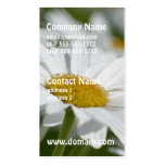 Field of Daisies Double-Sided Standard Business Cards (Pack Of 100)