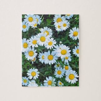Field of daisies jigsaw puzzle
