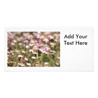 Field of Daisies Photo Photo Cards