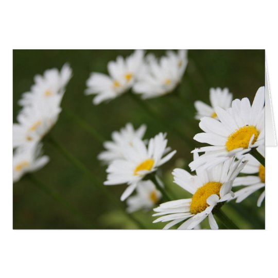 Field of Daisies - Thinking of You Card