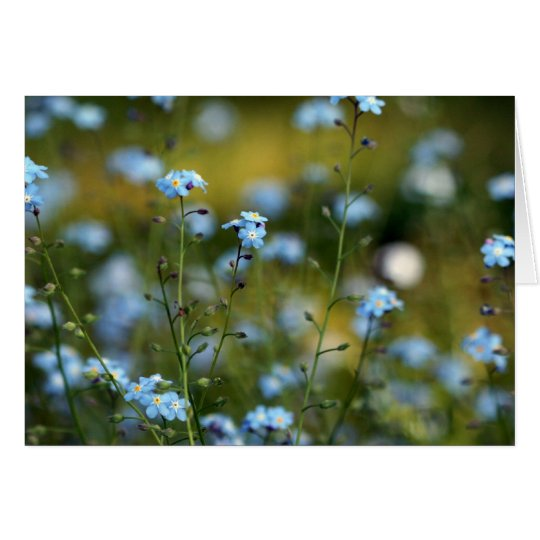 Field of Forget-Me-Not Flowers Card