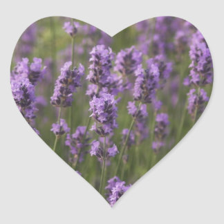 Field of Lavender Heart Sticker