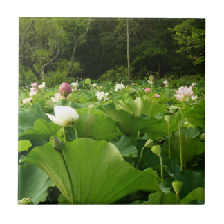 Field of Lotus Flowers Small Square Tile