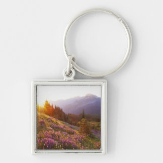 Field of lupine and Olympic Mountains at Key Ring