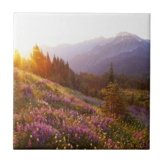 Field of lupine and Olympic Mountains at Tile
