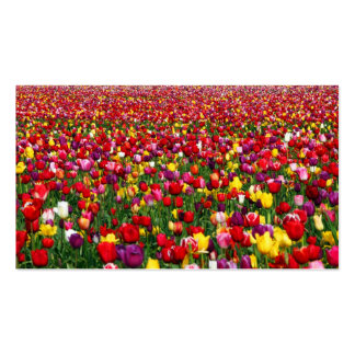 Field of multicolored tulips pack of standard business cards