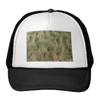 Field of Partial Dry Grass Cap