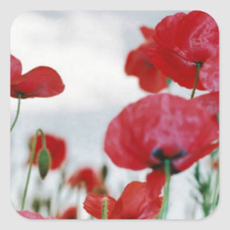 Field of Poppies Against Grey Sky Square Sticker