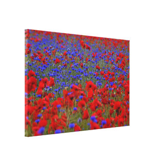 Field of poppies and cornflowers canvas print
