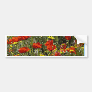 Field of Poppies Bumper Sticker