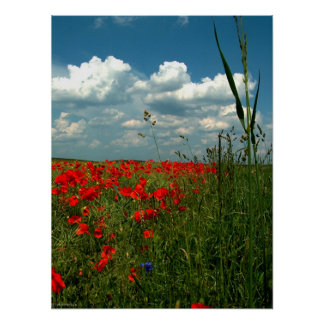 Field of poppies II Poster