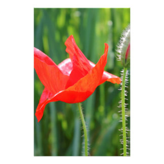 field of poppies stationery