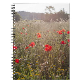 Field of poppy flowers notebooks