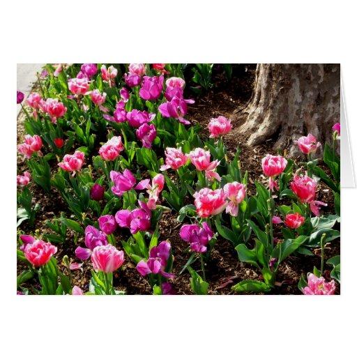 'Field of Springtime' Blank Greeting Card