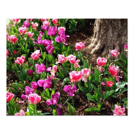 'Field of Springtime' Photographic Print