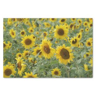"Field of Sunflowers 10"" X 15"" Tissue Paper"