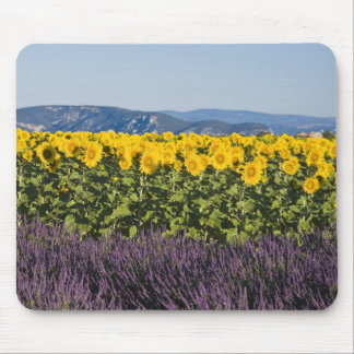 Field of sunflowers and lavender flowers, mouse mat