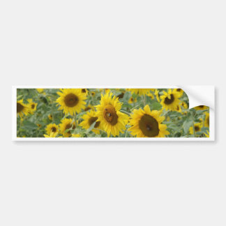 Field of Sunflowers Bumper Sticker