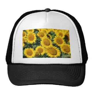 Field of Sunflowers Hat
