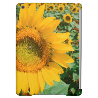 Field Of Sunflowers. Heidleberg District Case For iPad Air
