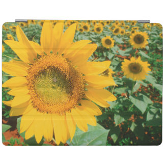 Field Of Sunflowers. Heidleberg District iPad Cover