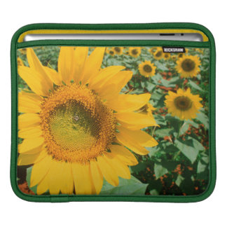 Field Of Sunflowers. Heidleberg District iPad Sleeve