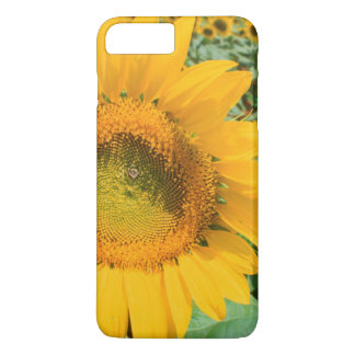Field Of Sunflowers. Heidleberg District iPhone 8 Plus/7 Plus Case