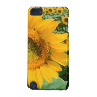 Field Of Sunflowers. Heidleberg District iPod Touch 5G Cases